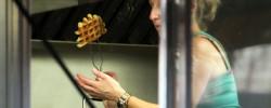 Belgian Waffle Co